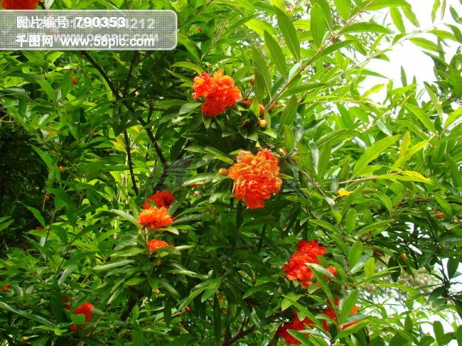 树 红花 绿叶