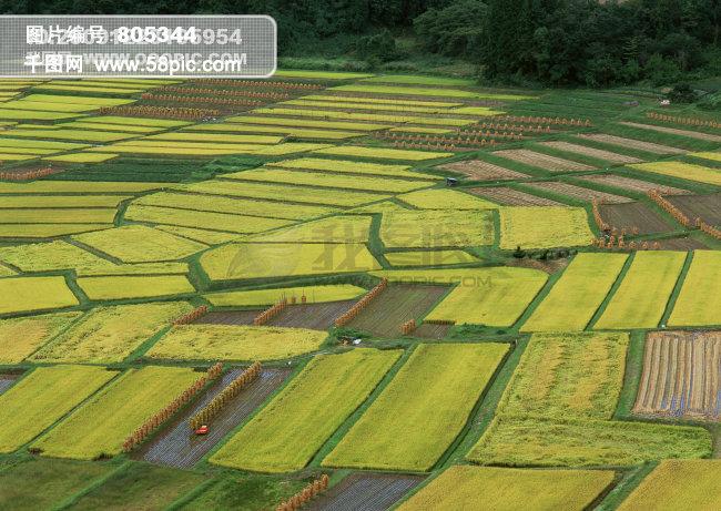 稻田平面手绘图