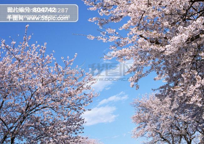 千图网提供精美好看的图片素材免费下载,本次图片作品是关于背景/素材图片素材,主题是树 木 花 草 天 空,编号是804742,格式是jpg,建议使用对应的软件打开件打开,该背景/素材图片素材大小是2.02 MB,尺寸为2950x2094。 树 木 花 草 天 空是由图片设计师无限 WX上传. 浏览本次作品的您可能还对 树