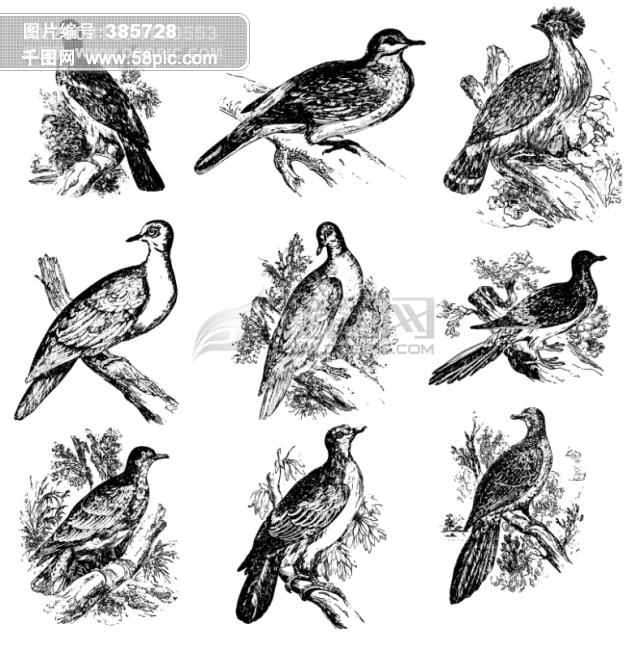 鸟类欧美古典线条矢量素材