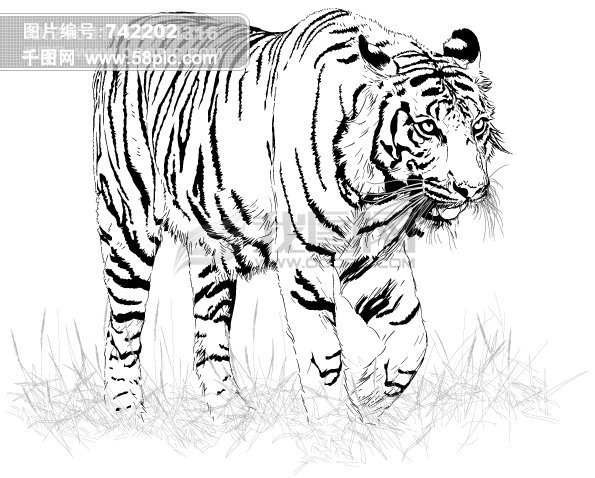 黑白素描虎矢量矢量图免费下载 千图网图片