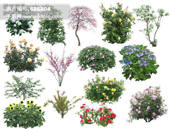 唯美花树手绘图